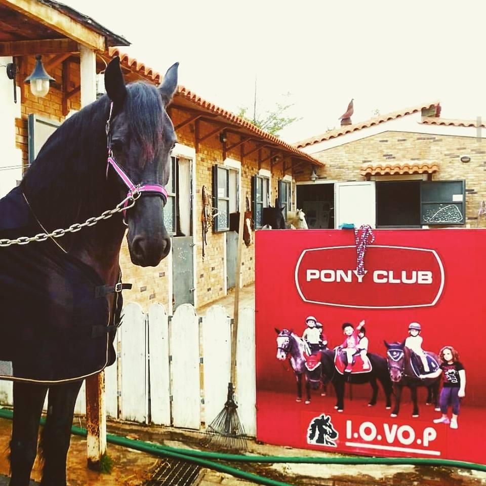 pony-club
